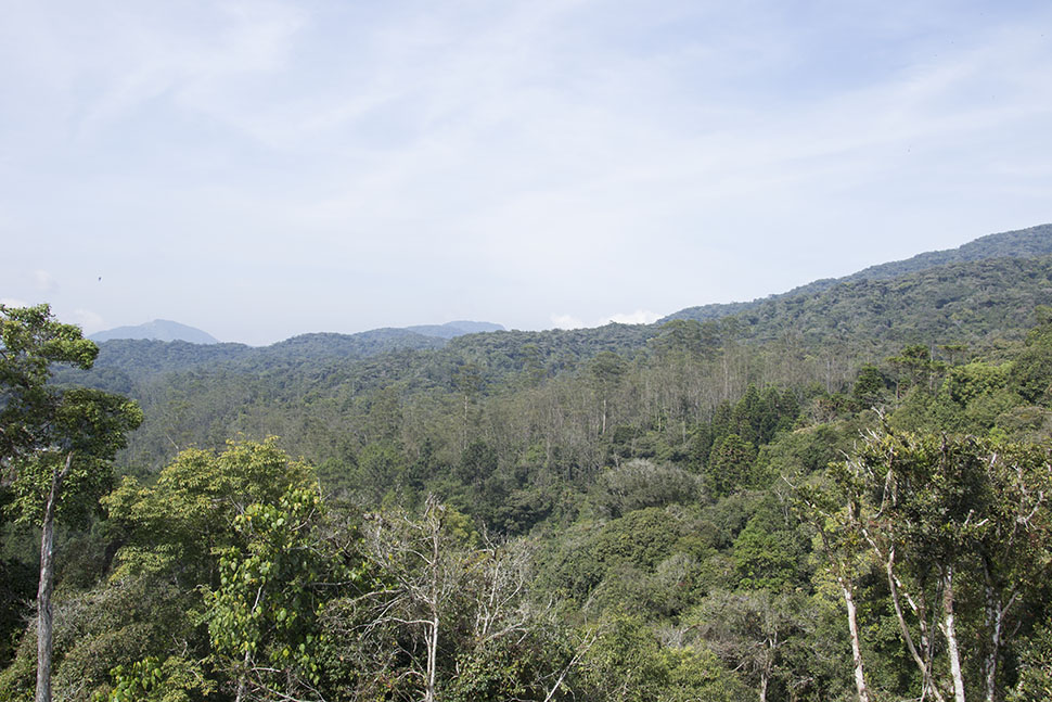 dangdiren-cameron-highlands-keafarm-raaju-hill