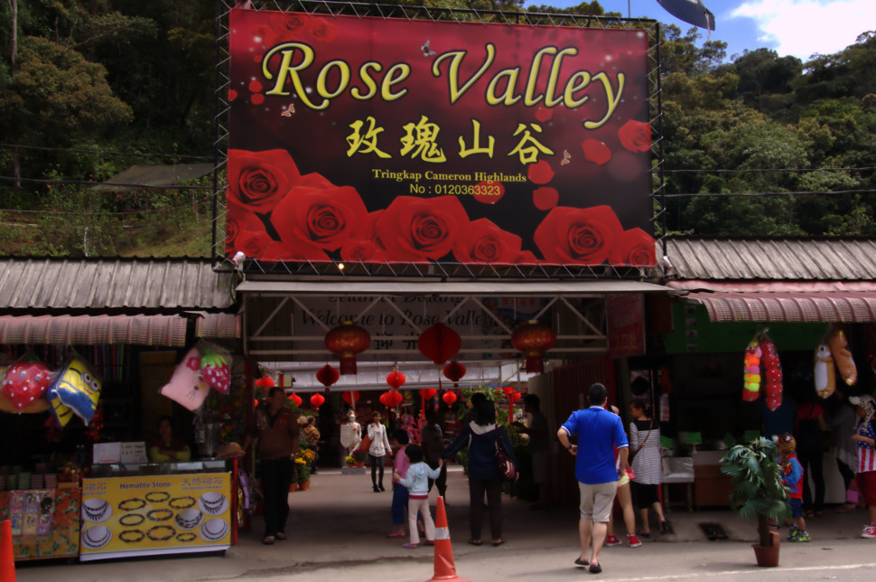 dangdiren cameron highlands tringkap rose valley