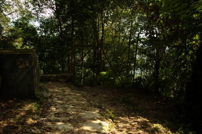 dangdiren-jungle-trail-9-road