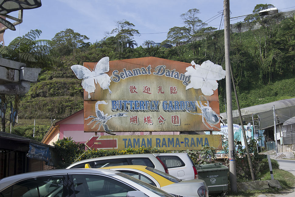 dangdiren-cameron-highlands-kea-farm-butterfly-farm
