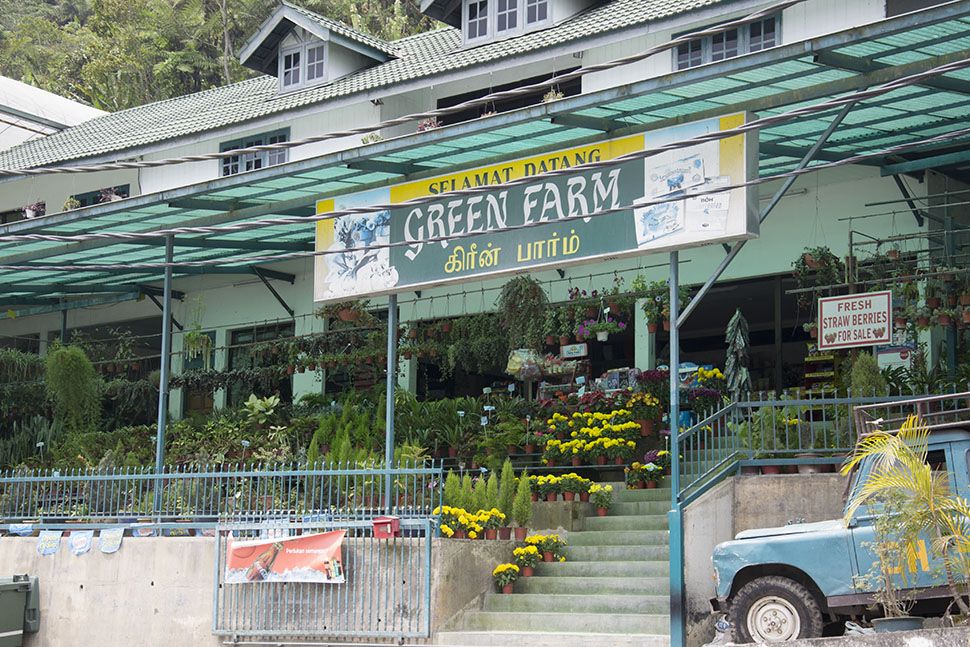 dangdiren-cameron-highlands-green-farm