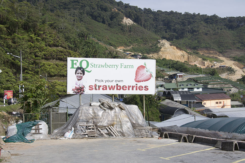 dangdiren-cameron-highlands-kea-farm-eq-strawberry-farm