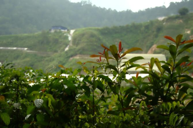 dangdiren-jungle-trail-9-farm