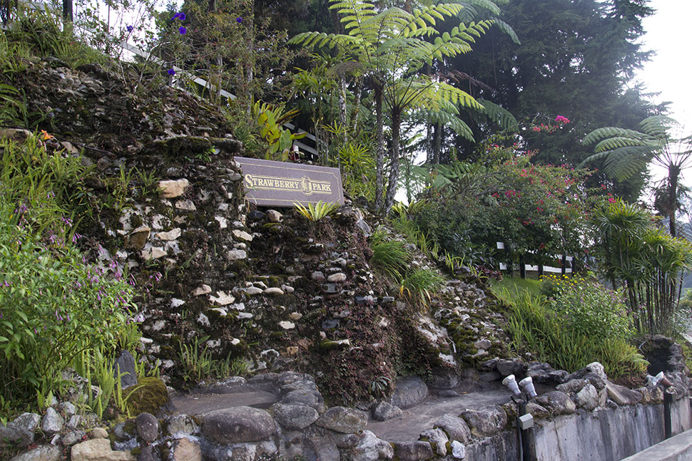 dangdiren-cameron-highlands-strawberry-park-resort
