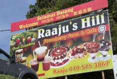 dangdiren-cameron-highlands-keafarm-raaju-hill