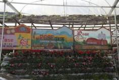 dangdiren-cameron-highlands-keafarm-rose-centre